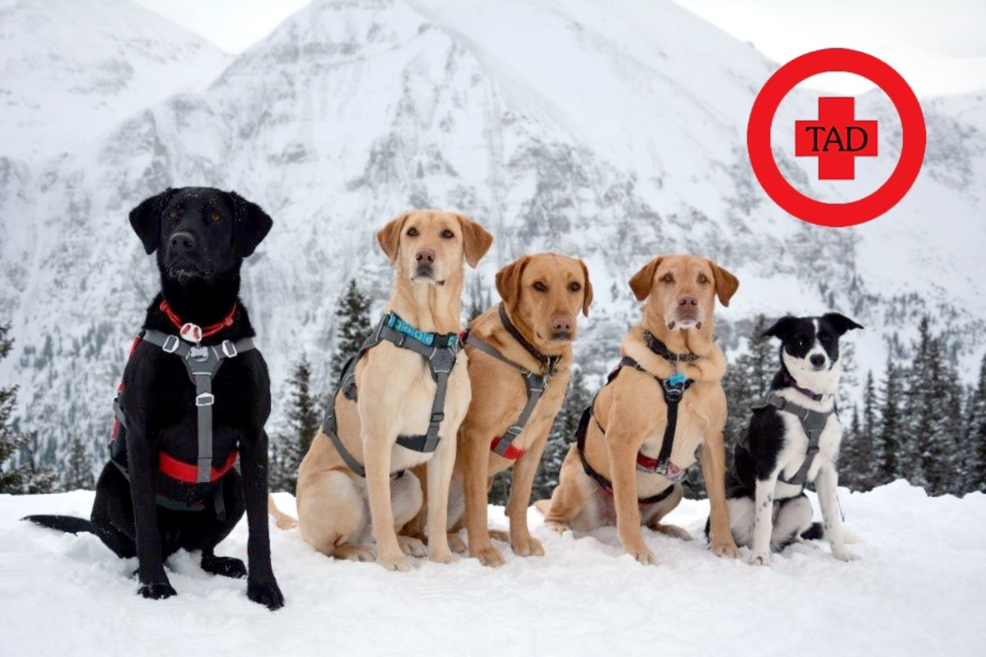 Picture of Telluride Avalanche Dog Donation Pass
